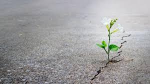 Resiliencia 2